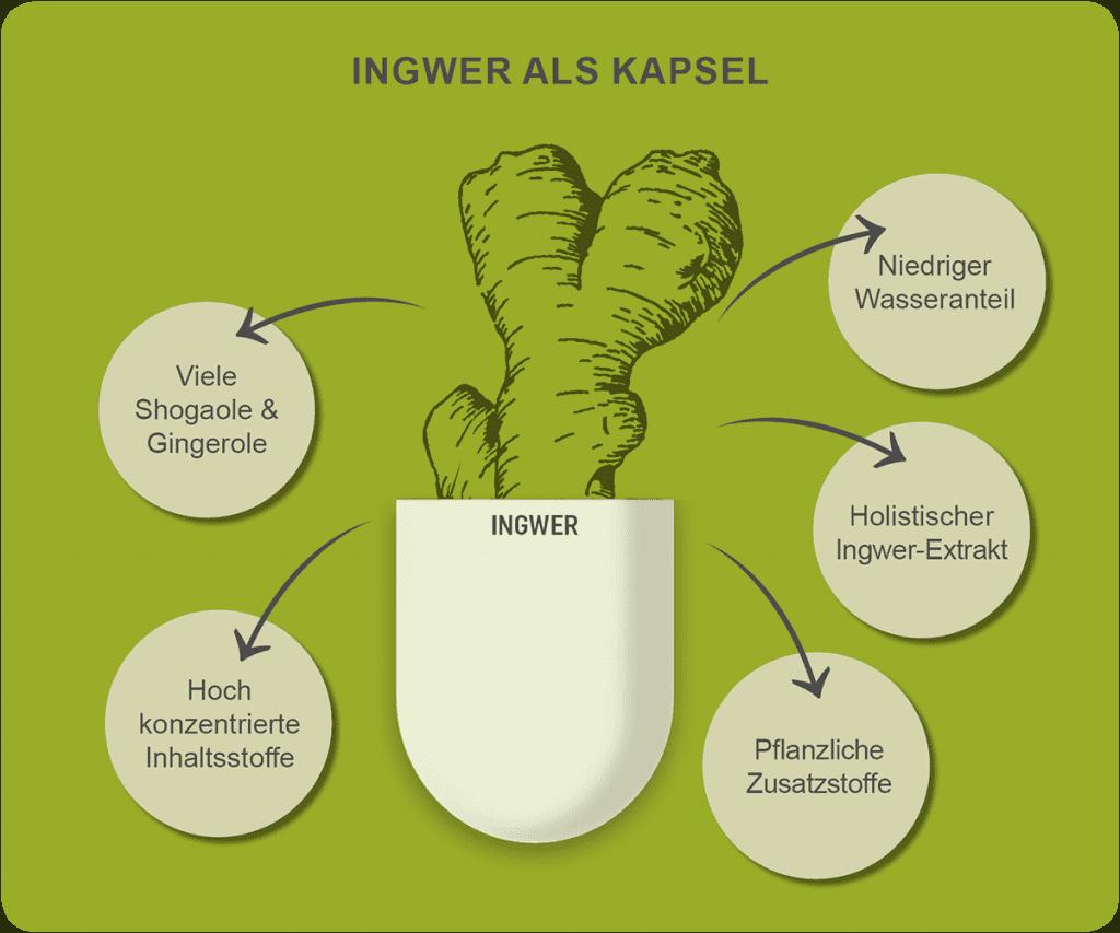 Qualitätsmerkmale von Ingwer-Kapseln